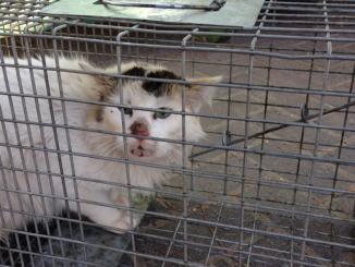 249 חתולי רחוב באילת עוקרו וסורסו
